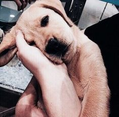 Discovered by h a n n a h. Find images and videos about puppy, labrador and dog on We Heart It - the app to get lost in what you love. #labradorpuppy #labradorretriever