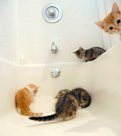 bathtub investigation