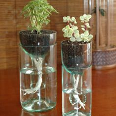 Self watering planter made from recycled bottles