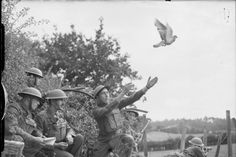 British troops release a carrier pigeon in August 1940