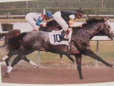 Rare picture of Holy Bull and Cigar from the Feb. 11, 1995 Donn Handicap. This was the race in which Holy Bull was hurt and was then retired.  Cigar went on to fame and fortune, and a 16 race win streak.