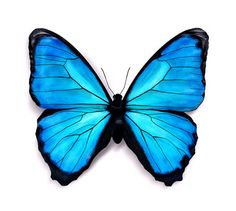 Butterfly Clipart With Purple, Turquoise, Green & Black In It - Google Search
