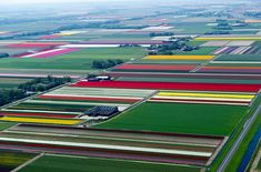 aerial photos of tulip fields in the netherlands - so colorful!
