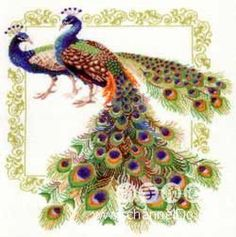 FREE CROSS STITCH CHARTS: BIRDS ~~ TWO PEACOCKS  PG 1 OF 8