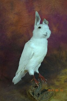 taxidermy of rabbit head and pigeon  freak rabbit by lovefuture