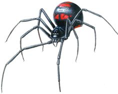 List of Spider Breeds | ... Geographics: widow spider black widow spider brown widow spider