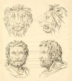 Charles Le Brun, concernant le rapport de la physionomie humaine avec celle des animaux - rapport de la figure humaine avec celle du lion