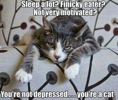 You're not depressed. You're a cat.