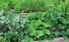 Что с чем сажать, чтобы увеличить урожай - Садоводка