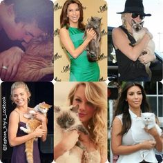 CAT LOVER CELEBS#iansomerhalder#evalongoria#kesha#annalynnmccord#taylorswift#kimkardashian#vampire #cat #pet #kitten #kitty #dog #pup #puppy #pup #cute #sweet #harrystyles #damonsomerhalder #victoriabeckham #bff #fur #diva #thevampirediaries #red #blonde #fashion #curls #nahla... - Celebrity Fashion