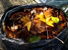 Leaf Mold Easy to Make andUse!