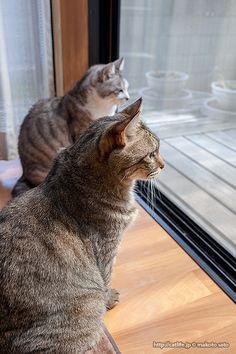 キンタ&ギンタ