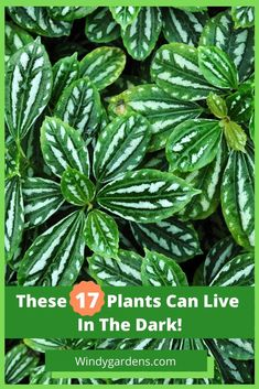 Home Interior Salas We've rounded up 17 fabulous houseplants that you can keep in the dark! Find out what they are.Home Interior Salas We've rounded up 17 fabulous houseplants that you can keep in the dark! Find out what they are. Inside Plants, Cool Plants, Cheap Plants, Household Plants, Low Light Plants, Country House Interior, Best Indoor Plants, Beautiful Houses Interior, Bathroom Plants