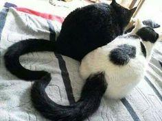 #Iheartcats