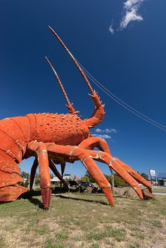 The big lobster •  'Larry' at Kingston South Australia • the best of South Australia • love our Aussie kitsch! • Australian humour • Australian culture • aussie big things • riawati