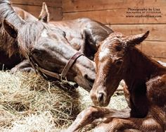 The Foal Project Benefits Therapeutic Riding Centers too!