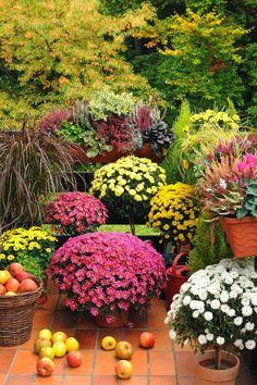 Fall plants to brighten your garden  #autumn #organic #garden
