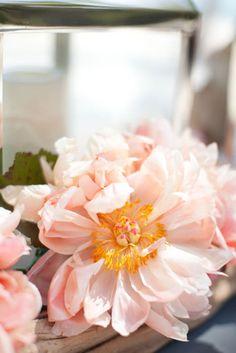 gorgeous blush flowers