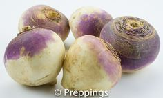 Turnip / Purple Top Turnip / Boule d'Or, Common Turnip / Croissy :: Search by flavors, find similar varieties and discover new uses for ingredients @ preppings.com