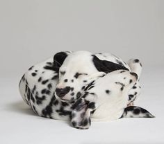 Adorable Pictures of Two Dogs Relationship – Fubiz Media