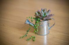 mini succulent in metal watering can