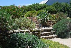 Saldahna Bay, Western Cape, South Africa.   Franchesca Watson | Garden Designer