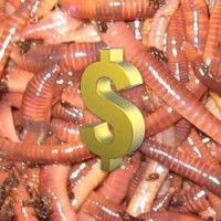 7 Fun Ways to Make Money With Worms « Worm Farming Alliance Red Worm Composting, Worm Farm Diy, Red Wiggler Worms, Worm Beds, Red Wigglers, Fishing Worms, Red Worms, Sustainable Farming, Sustainability