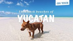 Best laid back beaches in Yucatán, Mexico: Holbox, Puerto Morelos, Tulum #travel #mexico
