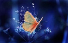 Beautiful Butterflies are one of a lot of varied as well as attractive insects worldwide. The huge team of butterflies consist of greater than 250000 flavor Butterfly Photos, Butterfly Wallpaper, Butterfly Kisses, Hd Wallpaper, Butterfly Background, Desktop Wallpapers, Orange Butterfly, Butterfly Flowers, Beautiful Butterflies