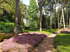 Zondag 31 augustus 2014 themaweek HEIDE op de Gasthuishoeve #heide #tuinplanten #tuincentrum #zuurminnende #heideplanten #heidetuin