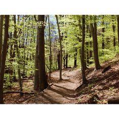 San Bernardo Switzerland, Hiking, San, Instagram, Walks, Trekking, Hill Walking