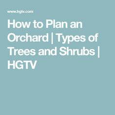 How to Plan an Orchard | Types of Trees and Shrubs | HGTV