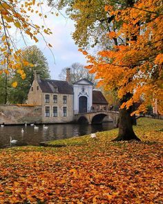Fall in love with Brugge in fall😁🍁🍂 mutlu cumalar❤️😘 Beautiful World, Beautiful Places, Destinations, Autumn Scenes, Autumn Aesthetic, Witch House, Belle Photo, Great Photos, Great Places