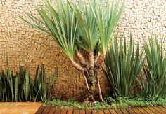 amazing wall with a gorgeous pandanus.
