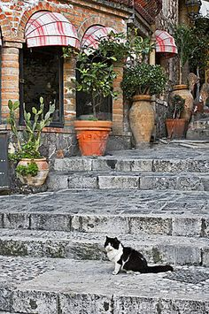 Cat Sitting On Alley Steps - Download From Over 53 Million High Quality Stock Photos, Images, Vectors. Sign up for FREE today. Image: 5746748