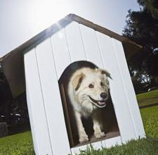 Dog Houses Make Your Own And Make Your On Pinterest