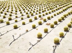 The Bizarre World of Modern-Day Agriculture Photographed by Henrik Spohler - Feature Shoot Agaves, Cactus Farm, Spring Usa, Borrego Springs, Modern Agriculture, Living Off The Land, Abstract Nature, Plantation, Weird World
