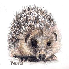 'Prickles 'in Derwent colour soft pencils#colouredpencil #colouredpencils #coloredpencils #coloredpencil #hedgehog #hedgehogs #hedgehogsofinstagram