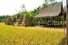 นี่คือ 25 อภิมหาโคตระเถียงนา ที่ถือว่าสวยบาดตาบาดใจ ดูทีไรน้ำตาจะไหลทุกที ขึ้นชื่อว่าเถียงนา นับได้ว่าเป็นสิ่งปลูกสร้างที่อยู่อาศัยคู่กับ ชาวนา ชาวไร่ ชาวสวนไทยมาช้านาน คิดถึงสมัยเมื่อครั้งตอนเด็ก …