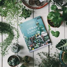 For keen plant keepers and indoor gardeners. Urban Jungle Book - Living and Styling with Plants
