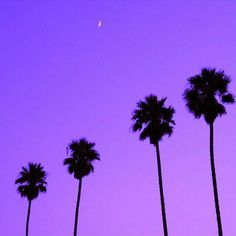 purple sky / moon / palm tree silhouettes / lavender pela phone case inspo / color love