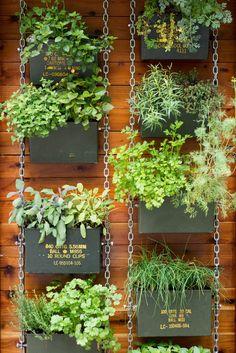 Hacer un jardín colgante similar con latas de munición.