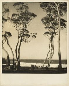Beach scene from Camping trips on Culburra Beach by Max Dupain and Olive Cotton 1937