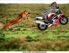 adidas neo hoops animal lion