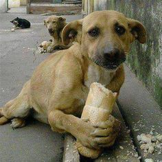 """A small boy when asked why he was feeding the dogs in Brazil said the dog had no one to love him and no food. He was told there are so many dogs that it would not make a difference. """"It makes all the difference in the world to this one,"""" he replied."""