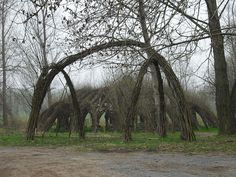 Using trees as a building material results in fantastically overgrown creations. Tree architecture