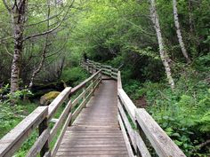 Enjoy these 12 amazing boardwalks in Northern California. They are magical!