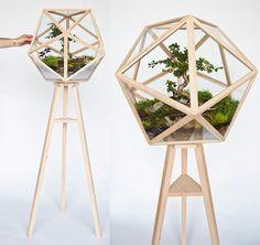 Two in one: Bonsai and Terrarium | Terrariums | Scoop.it
