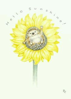 The inside of a sunflower looks indeed like a hedgehog. Maybe they hide in there so the humans won't see them Hedgehog Art, Happy Hedgehog, Cute Hedgehog, Hedgehog Tattoo, Hedgehog House, Hedgehog Illustration, Cute Illustration, Cross Art, Penny Black