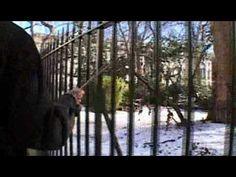 Francis Alÿs Railings - YouTube